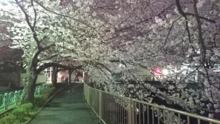 夜桜③.JPG