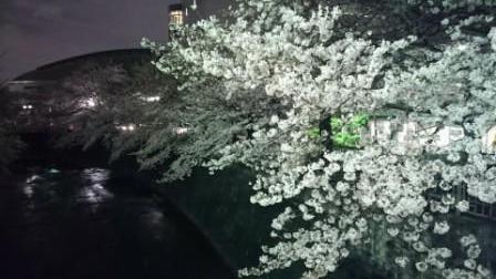 夜桜④.JPG
