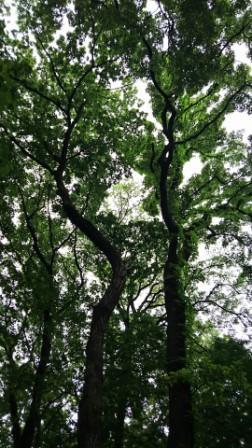 神代植物公園㉑.JPG
