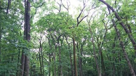 神代植物公園㉒.JPG